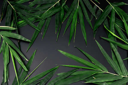 Dark green bamboo on black background