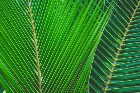 close-up green color coconut leaf texture