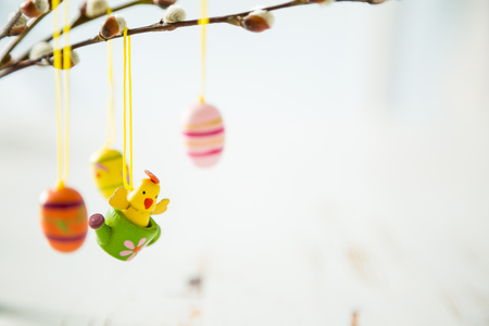 pussy willow: Easter decorations on pussy willow, copy space Stock Photo