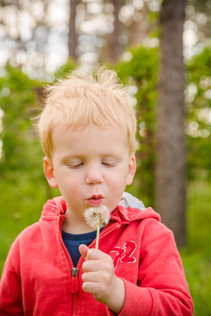 blowing dandelion: Boy blowing dandelion flower, green background, closeup Stock Photo