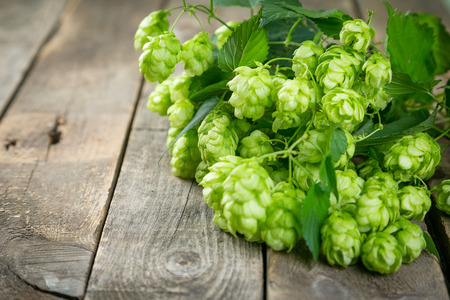 Branches of hops on wood background, copy space Banco de Imagens