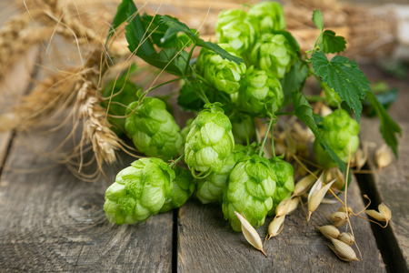Beer ingredients - hops, wheat, barley on rustic wood background Imagens