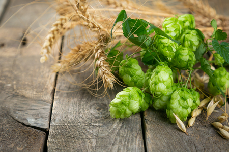 Beer ingredients - hops, wheat, barley on rustic wood background, copy space Imagens