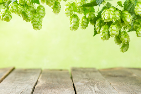 Empty background with wood table and hops branches, copy space Foto de archivo
