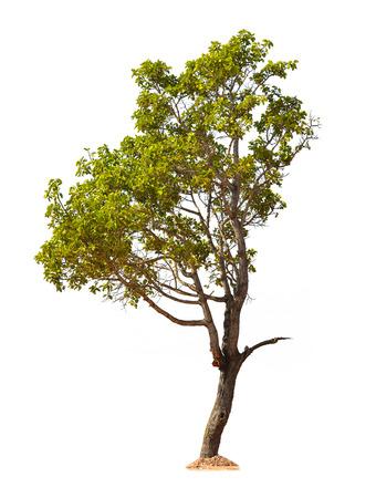 Árvore isolada no fundo branco Imagens