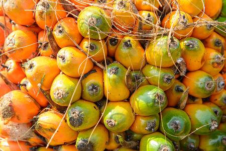 red palm oil: Olio di palma frutta