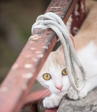 глядя на камеру: портрет выстрел кошку ищет камеру