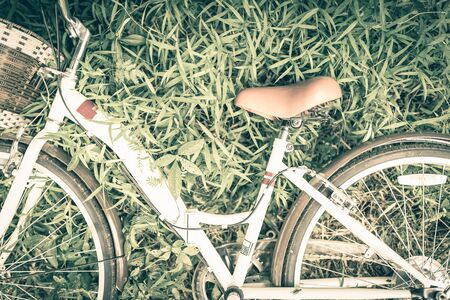 grassfield: Vintage Bicycle with Summer grassfield,vintage tone style