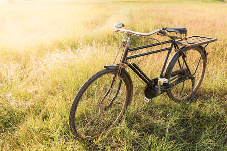 grassfield: Vintage Bicycle with Summer grassfield
