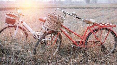 two tone: beautiful landscape image with two vintage Bicycle at summer grass field ; vintage filtered tone style