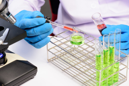 clinician: Hands of clinician holding tools during scientific experiment in laboratory