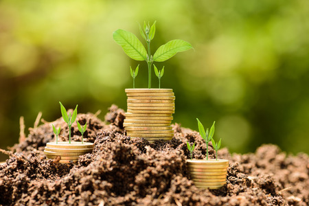 Money Gold coin stack growing graph on ground with green bokeh background;Trees growing on gold coin;Business Finance and Money concept Imagens