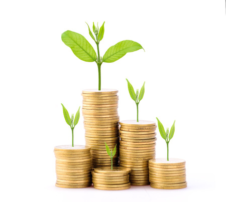 Business Finance and Money concept, Money Gold coin stack growing graph with white background,Plant growing on gold coin Stock Photo