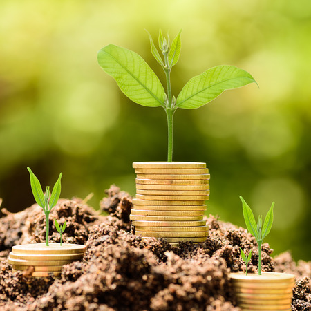 Money Gold coin stack growing graph on ground with green bokeh background;Trees growing on gold coin;Business Finance and Money concept Foto de archivo