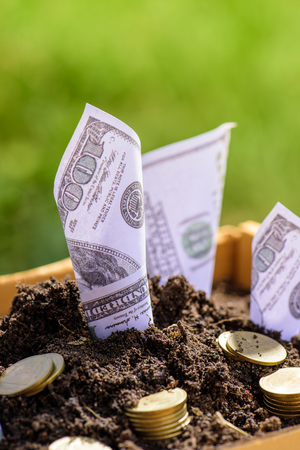 Us dollars grow from the ground Box ; investment concept