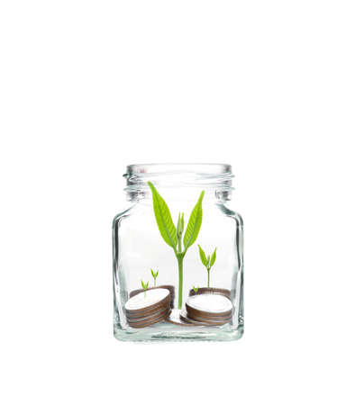 investment concept: coins with seed in clear bottle on white background,Business investment growth concept,saving concept Stock Photo