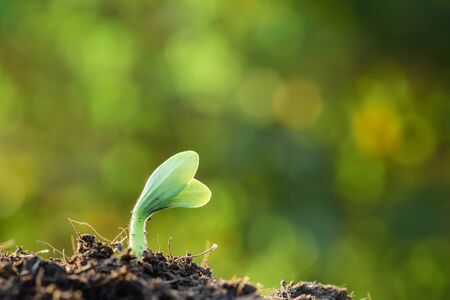 Plant, Agriculture, Seeding,Seedling, Close up Young plant growing over green  bokeh background
