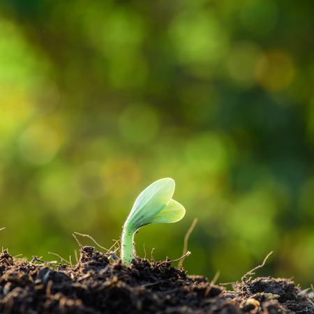 seeding: Plant, Agriculture, Seeding,Seedling, Close up Young plant growing over green  bokeh background