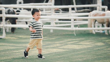 Adorable little boy of two years having fun on green field in summer in soft evening light