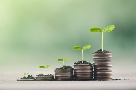 Money coin stack growing graph with green bokeh background,investment concept.tree growing on coin,Business Finance and Save Money concept