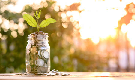 Growing Money, business finance and savings money invest , Balance savings and investment, Plant Growing In Savings Coins, Investment And Interest Concept