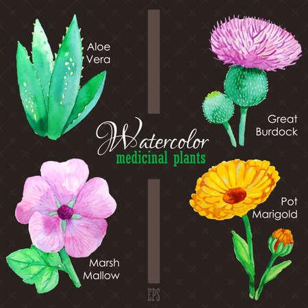 calendula: Set of watercolor madicinal plants
