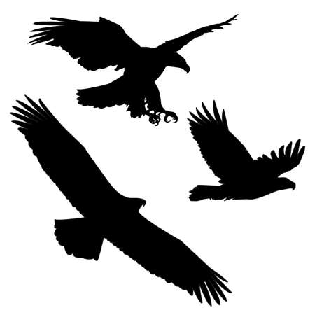 Set of black silhouette three eagles
