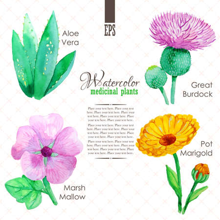 calendula: Set of watercolor madicinal plants