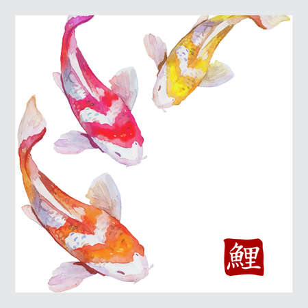 Japanese watercolor carps koi swimming. Calligraphic simbol. Vector