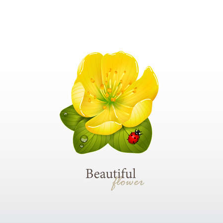 buddism: Yellow cherry flower with leaves and ladybug. Logo of yoga studio or beauty salon