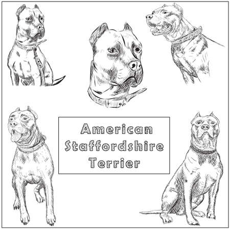 Freehand sketch illustration of American Pit Bull Terrier, 向量圖像