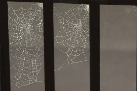 many Spider webs with dew drops  photo