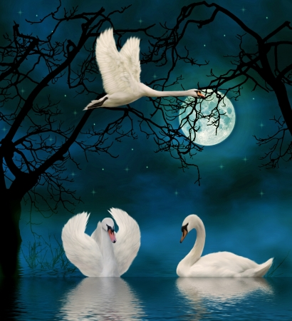 birds lake: swans in the moonlight
