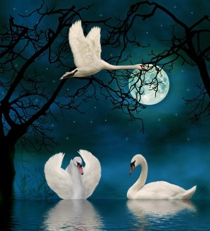 swan lake: swans in the moonlight