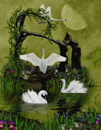 swans in the moonlight photo