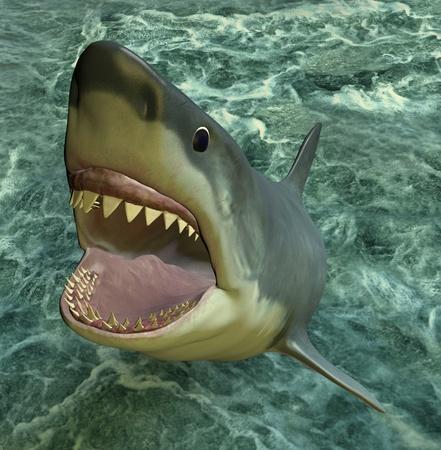 shark teeth: Shark attack Foto de archivo