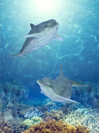 Dolphin: cá heo hạnh phúc