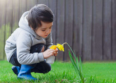Active kid using spray bottle watering flowers in the garden, Child spraying water on daffodils flowers, Cute boy having fun with gardening, Children gardening concept Фото со стока
