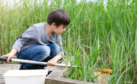 Portrait Kid boy catching creatures in pond with net in summer time,  Child explorer and learning about wild nature in countryside, Summer camp outdoors activity for children