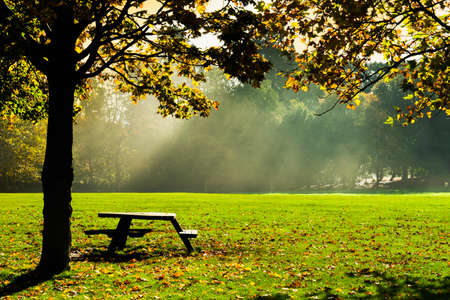 Landscape Autumn park with wooden  bench with sunray in the morning, Morning sun beams in public park.