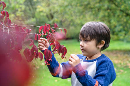 Portrait kid pointing finger to small spider climbing on red leaves, Cute little boy with proud face showing wild tiny insect on Autumn leaf, Child explorer and learning about wild nature in Autumn 版權商用圖片