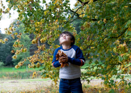 Portrait  Active kid holding autumn leaves ready to throw in the air, Happy child playing under big tree, Cute little boy wearing jumper  playing outside in Autumn park.