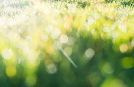 Defocused blurry bokeh of raindrops on green grass field with sunrise shining the morning, Green bokeh of natural after raining, Blurred image of water drops on meadow background 版權商用圖片