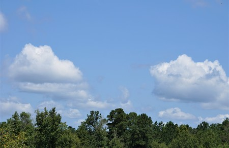 The tip of the tree against blue sky and white cumulus clouds, Summer in GA USA. 写真素材