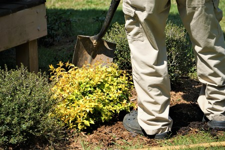 A senior man planting the new shrub with shovel in his own garden, Spring in Georgia USA. 스톡 콘텐츠