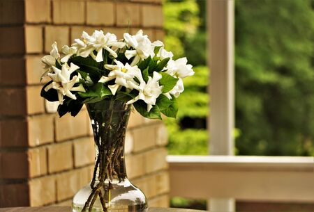 Pretty gardenia flowers (Gardenia jasminoides) are in the clear glass vase  at the terrace on blurred garden as the background , Spring in Georgia USA.