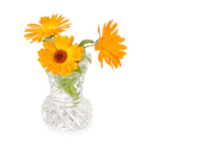Three calendula flowers in cut-glass vase isolated on white