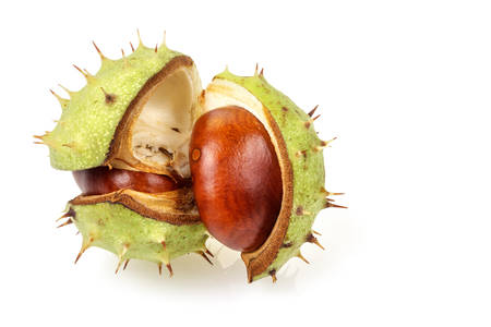 aesculus hippocastanum: Horse chestnut (Aesculus hippocastanum) in natural shell  isolated on white