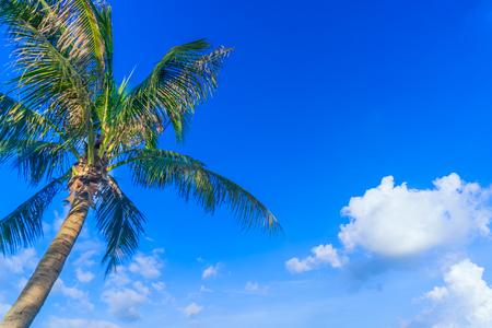coconut tree under the blue sky Stock Photo