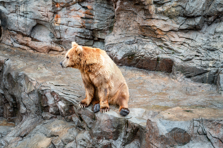 bear sitting on the rock